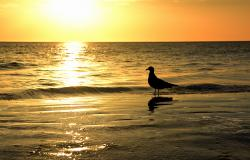 images/Fotos/Natur/Tierwelten/thumbs//Sunset_Cape-Canaveral_5117.jpg